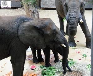 04092015 Zoo Vienna